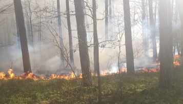 Podpalał lasy i trawy. 37-latek nie ujawnił powodów wzniecania pożarów