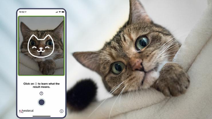 Jak czuje się twój kot? Powstała aplikacja, która pomoże to stwierdzić